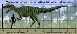 Megalosaurus-size