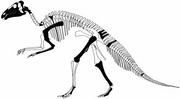 Telmatosaurus transsylvanicus. The skeletal parts known according to WEISHAMPEL et al. (1993), in black. The basis for the postcranial skeleton is that of Edmontosaurus, from WELLNHOFER (1994), modified.