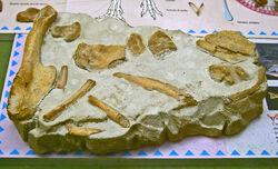 Сальтриозавр 3