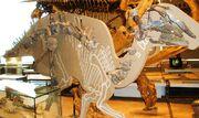 Bactrosaurus fossil