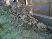 Crichtonpelta fossil