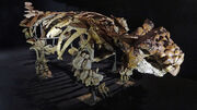 Saichania fossil