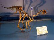 Ajancingenia fossil