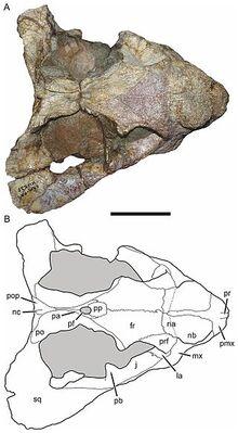 Bulbasaurus-4