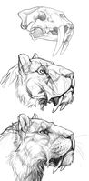 Smilodon study by mrxylax-daes2fa
