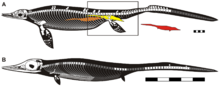 Stylized reconstruction of adult and embryo of Chaohusaurus.