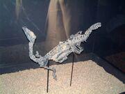 Eoraptor skeletal