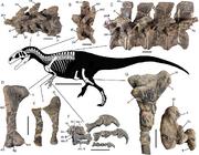 Asfaltovenator skeletal