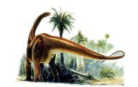 Datousaurus web 3124