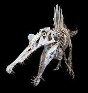 Спинозавр7