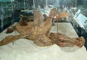 Edmontosaurus Trachodon 03
