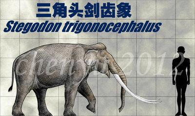 Stegodon trigonocephalus by sinammonite-d5gz0m3