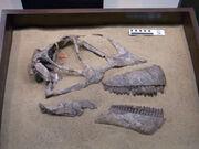 Mamenchisaurus skull
