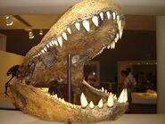 Purussaurus-cherep-1-m