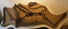 Struthiomimus specimen HI 1266