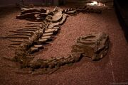 Yangchuanosaurus fossils
