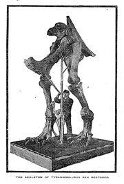 First tyrannosaurus-mount-1906