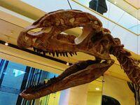 Синозавр череп