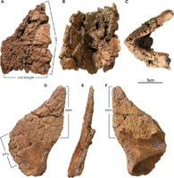 Wendiceratops rostral and nasal bones