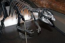 Квантасзавр