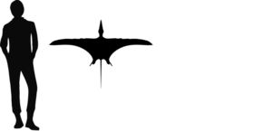 1dimorphodon size