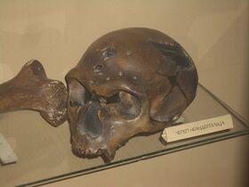800px-Неандерталец череп Ла-Шапель-о-Сен первоначальный