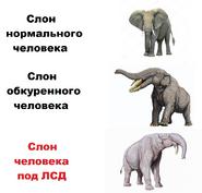 Мем про слонов