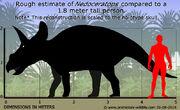 Nedoceratops-size