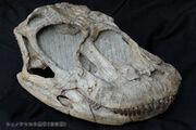 Shunosaurus skull 01