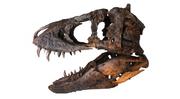 Tyrannosaurus TE-73.