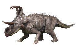 Machairoceratops NT small (1)
