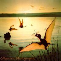 Pterodactylus water