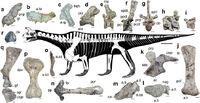 Скелет шрингазавра