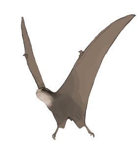 0Jeholopterus1