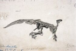 Iguanodon художник Gustave Lavalette (4)