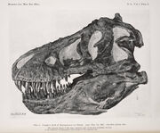 Tyrannosaurus skull AMNH 5027