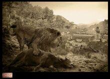 Барбарийский лев-0
