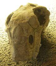 Lystrosaurus oviceps
