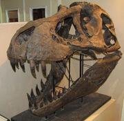 Tyrannosaurus Stan