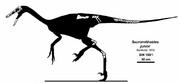 Zanabazar skeletal