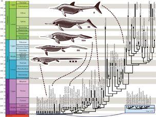 Эволюция морских рептилий (Ryosuke Motani, 2017)