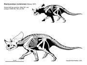Brachyceratops-scott-hartman