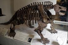 Скелет скутозавра, Американский Музей естественной истории