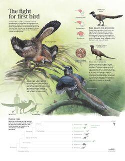 Bird origins