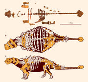Preserved elements and skeletal reconstructions of Akainacephalus johnsoni