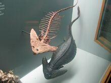 Диплокаул скелет