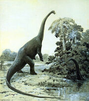 Diplodocus R. Knight 1907