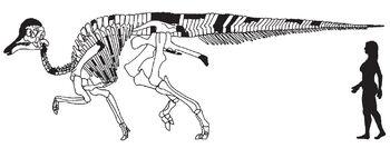 Amurosaurus skeletal