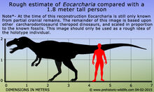 Eocarcharia-size