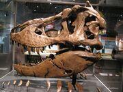 Tyrannosaurus Samson